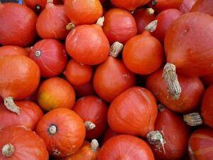 Pumpkin-Hokkaido-Ukraine-Heirloom-Vegetable-Seeds