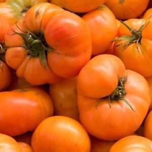 Amana Orange Tomato Seeds Non Gmo Rare Heirloom Variety Sizes