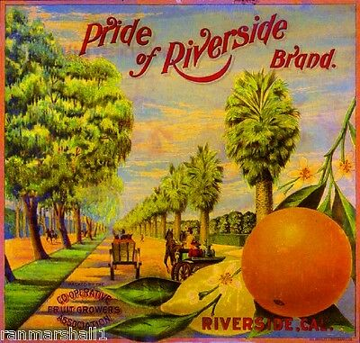 Pride of Fontana Brand Grapefruit California Citrus Fruit Crate Label Art Print