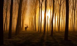 Impression-Encadree-Cerf-At-Sunset-Image-Renne-Elan-Roe-Orignal-Animal
