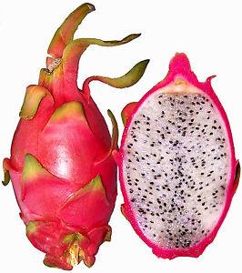 Pithaya-HYLOCEREUS-UNDATUS-20-Semillas-Rara-Fruta-Jardin-Rare-Garden-Seeds