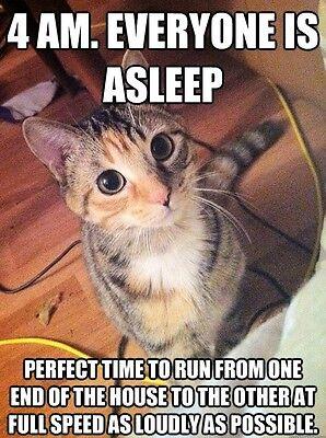 Funny Cat Meme 4 Am Fridge Magnet 5 X 3 5 Ebay