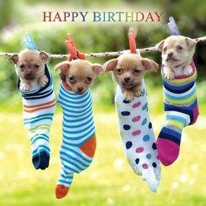 Image Is Loading Chihuahua Dogs Birthday Card Odd Socks Cute Funny