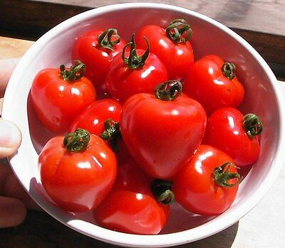 VEGETABLE TOMATO TOMATOBERRY F1 50 FINEST SEEDS BULK