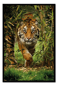 Bamboo-Tiger-Framed-Cork-Pin-Notice-Board-With-Pins