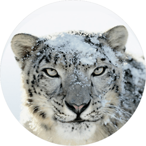 Details over Mac OS X 10 6 Snow Leopard DMG - Instant Delivery DOWNLOAD