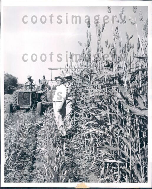 1953 Kansas Farmers Stand By Tractor & Crop of Grain & Forage Press Photo