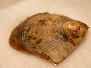 (2) Akoya Pearls in Oyster BEST GIFT IDEA STALKING STUFFER