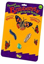 INSECT LORE Butterfly Life Cycle Stages, Grades PreK - 3
