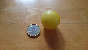 Tomate-Limette-Samen