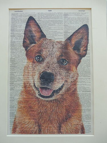 Red Heeler Print No.831 librarian gifts australian cattle dog print
