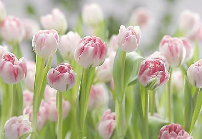 SECRET GARDEN Photo Wallpaper Wall Mural PINK FLOWERS TULIPS 368x254cm