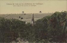 CUBA CIENFUEGOS COLONIA DE CAÑA EN SUS ALREDEDORES