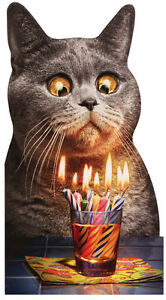 Breathtaking image inside free printable cat birthday cards
