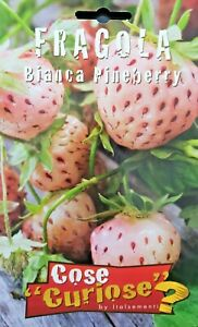 Fragaria-Vesca-Strawberry-White-Cv-Pineberry-1-Pack-Seeds-Freshwater-Cultured