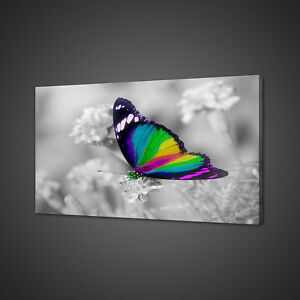 BEAUTIFUL-RAINBOW-BUTTERFLY-COLOURFUL-CANVAS-PRINT-WALL-ART-PICTURE-PHOTO