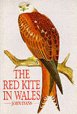 Red Kite in Wales