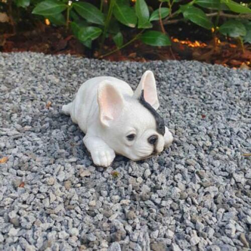 Französische Bulldogge Welpe liegt 13 cm wetterfeste Gartenfigur Hunde Figur