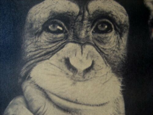 """Vintage Style Retro Paper Poster Gifts 21/""""x15/"""" Inch Chimpanzee Animal My Rule"""