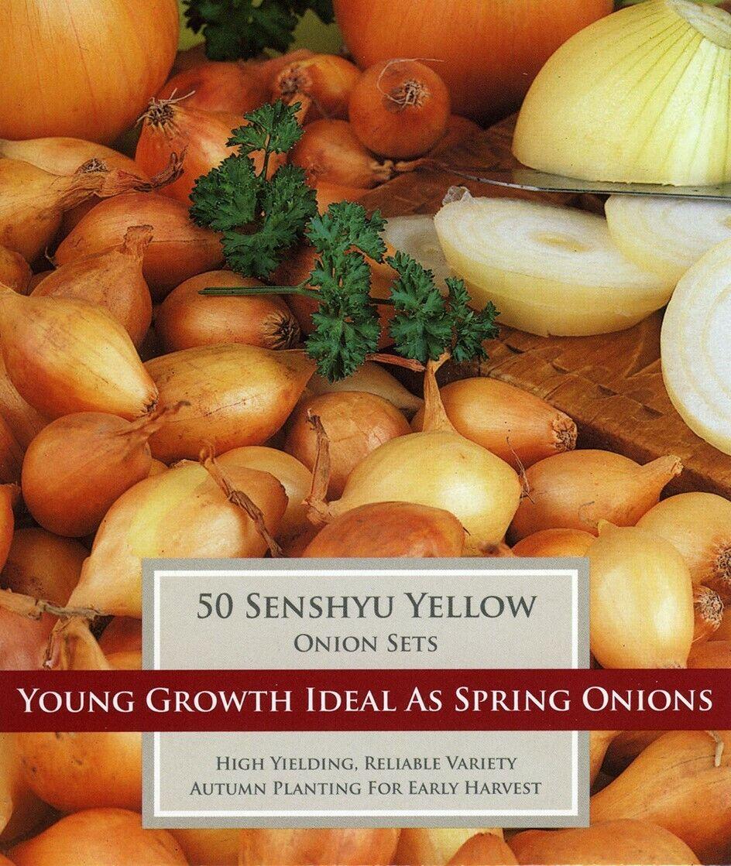 Onion Set Senshyu Yellow - Autumn Planting Winter Onion Sets. Bag of 50