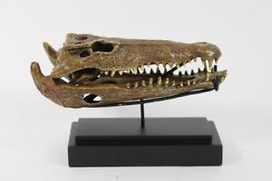 Skulptur-Figur-Bronze-teilpoliert-Krokodil-Alligator-Schaedel