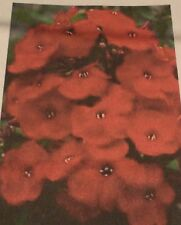 """Pack of 25 """"Red"""" Phlox Seeds NEW!"""