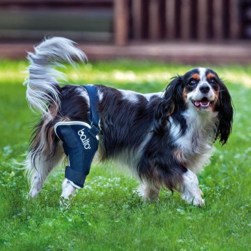 Balto Dog Knee Brace  Cruciate Ligament Arthritis Patella. BT-JUMP Orthopedic BU