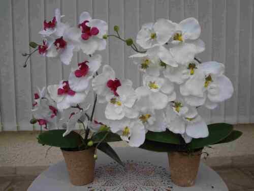 1x weiss//lila Phänal x2 Rispen-50cm.1x weiss 2 künstliche  Orchiden Arrang