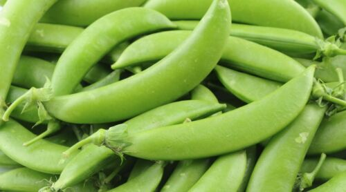 all non-gmo heirloom vegetable seeds! 50 SUGAR SNAP PEA SEEDS 2021