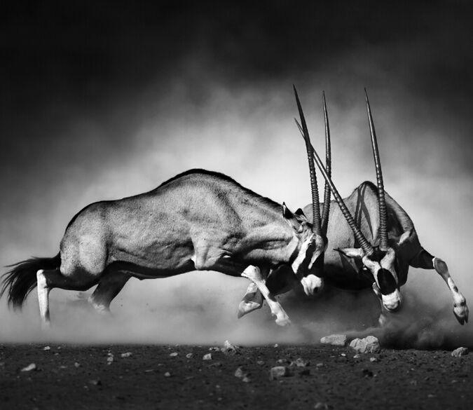 3D Antelope run 1 WallPaper Murals Wall Print Decal Wall Deco AJ WALLPAPER