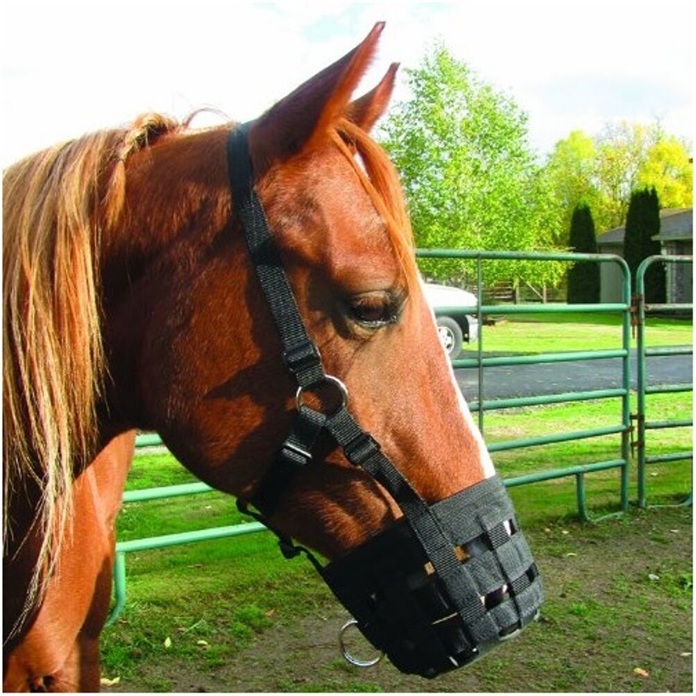 CASHEL GRAZING MUZZLE HALTER Adjustable control  feeding HORSE ARAB MINI or PONY  best offer