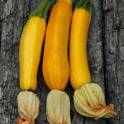 Seeds Zucchini Orange Amber High Yield Vegetable NON GMO Original Package