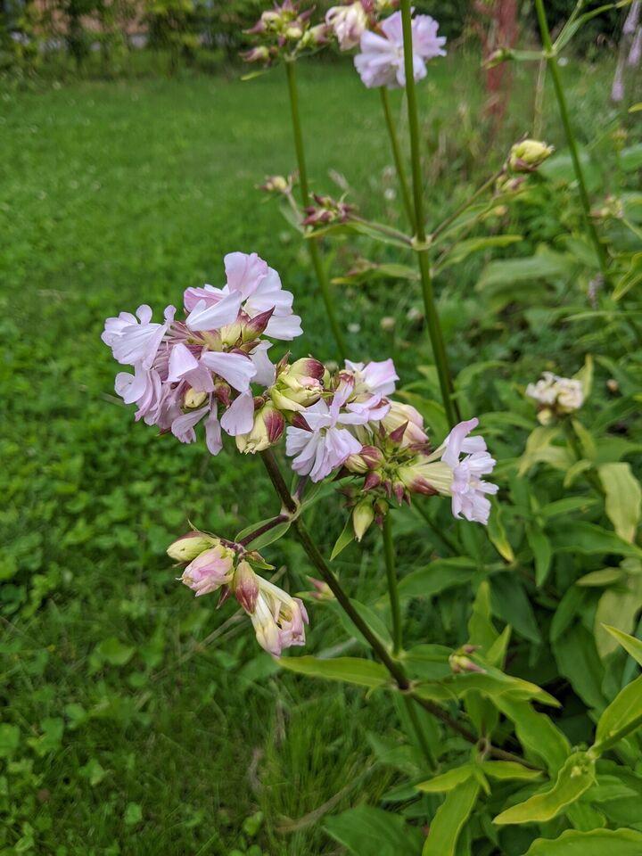 Stauder, planter, blomster