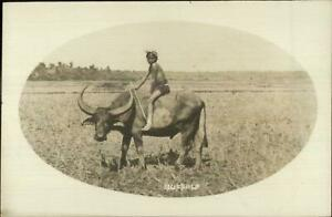 Native-Boy-Riding-Water-Buffalo-Ethnic-Netherlands-Cancel-Real-Photo-Postcard