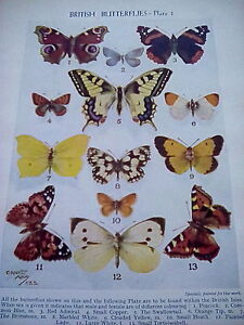 British-Butterflies-Double-Sided-Plates-2-Small-Pages-1950-039-s-to-frame