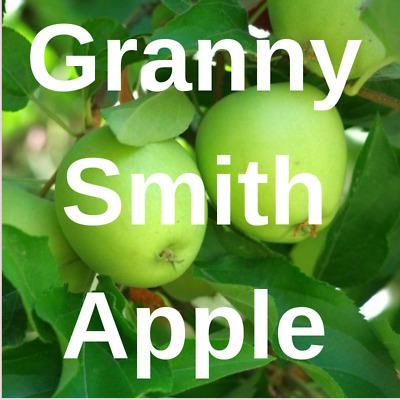 McIntosh Apple 3 Scion cuttings for grafting dormant