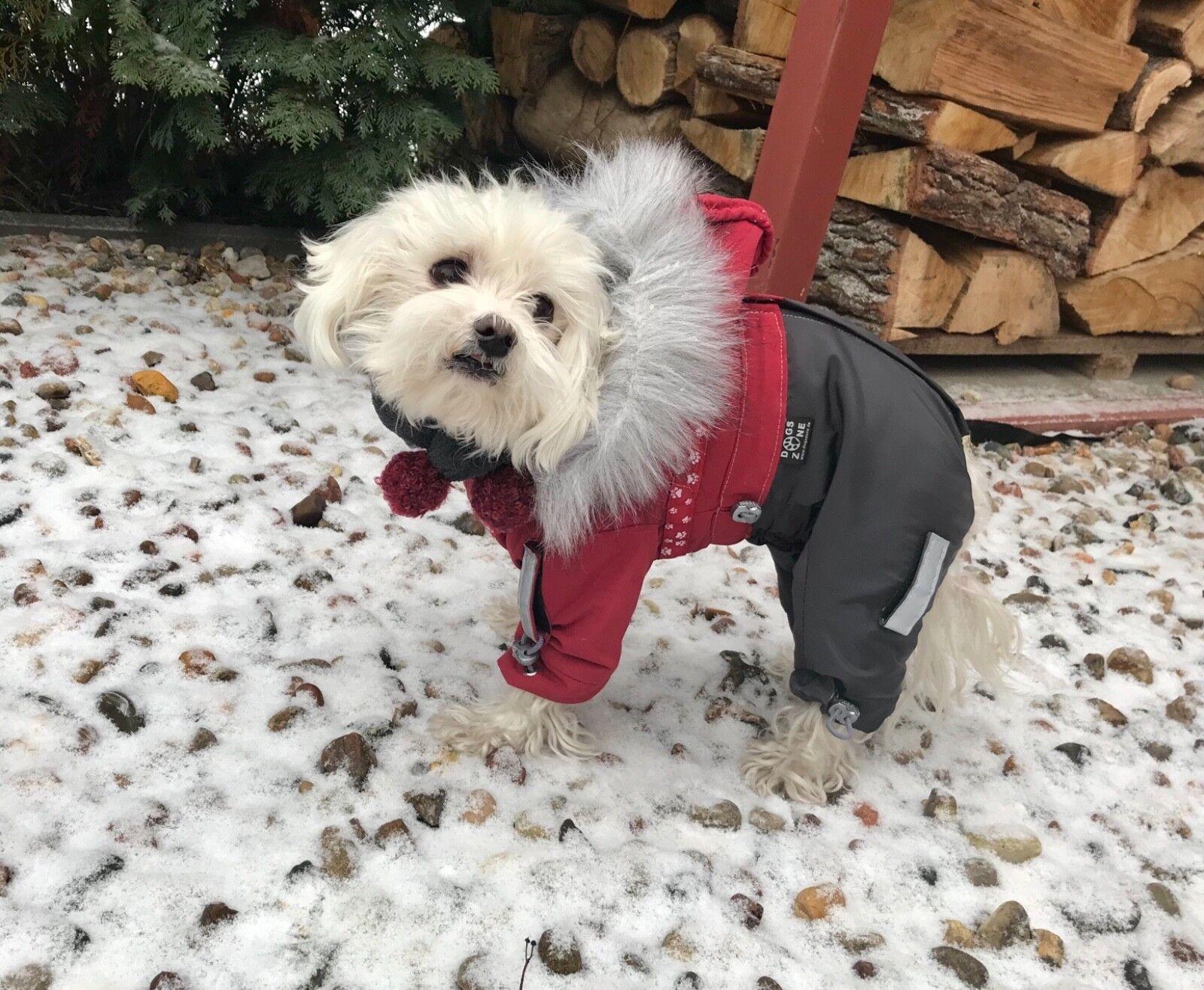 ATLANTA Wintermantel Schneemantel,Hundemantel,Mantel für Weibchen   | Passend In Der Farbe