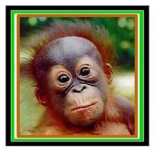 Baby Orangutan-Fun coche / la ventana de Sticker + 1 Gratis-Nueva-Regalo