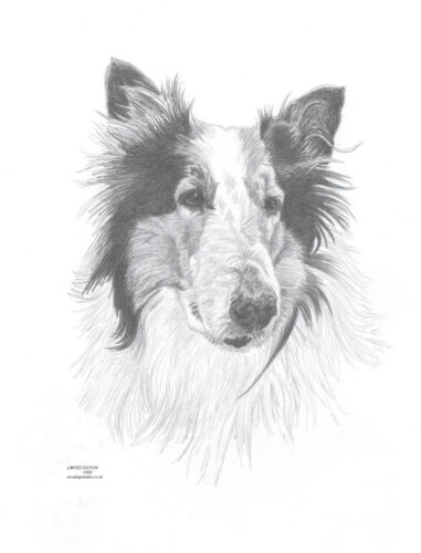 SHELTIE//ROUGH COLLIE Shetland dog art drawing print  A4//A3 /& note Greetings Card