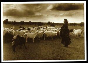 1001c-Postcard-INDIAN-MAIDEN-amp-HER-FLOCK-Navajo-1925-Photo-Wm-Pennington