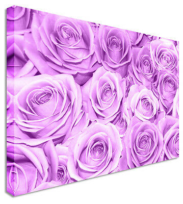 Purple Rose FlowerBed Floral Flower Canvas Wall Art Picture - Large+ Any Size