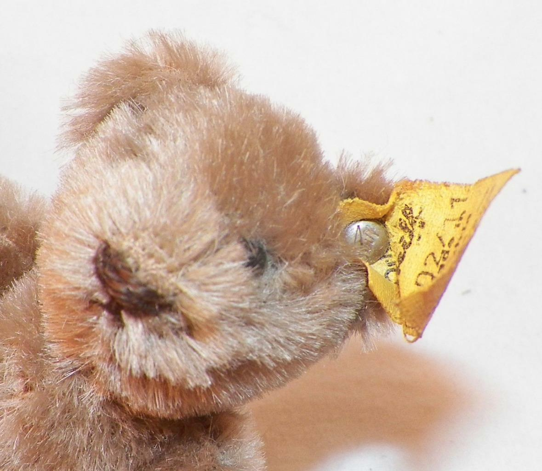 Steiff Teddy Bear Plush Animal w Button Tag & Tag Button Caramel 3in. Germany 0202/11 6a6ca3