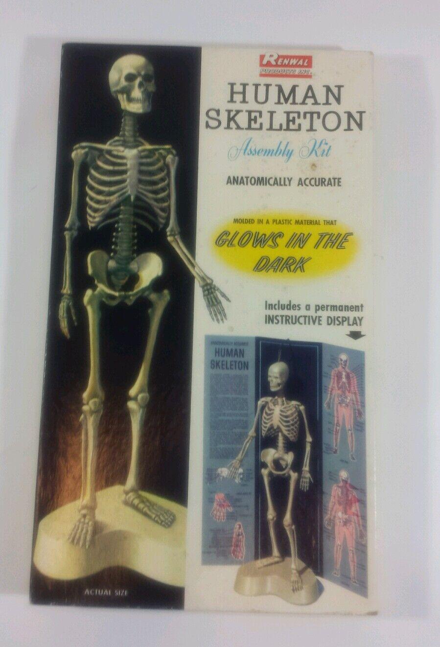 Jahr Modells Kits 1959 Renwal Human Skeleton Assembly Kit NIB MINT COND. Masse 3