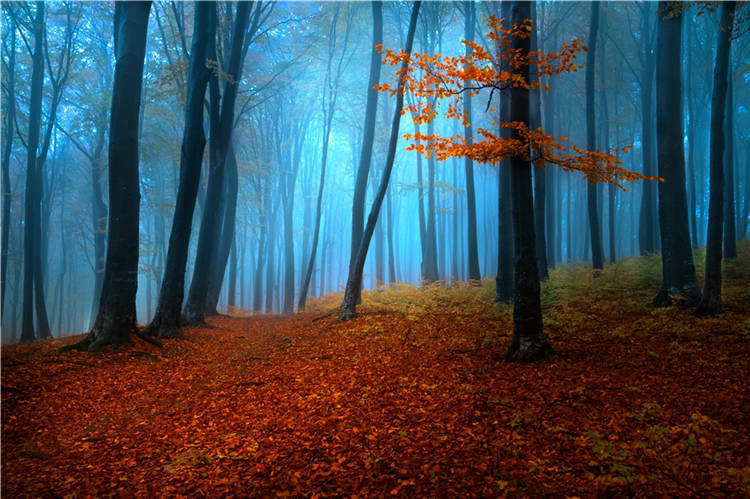 Foggy Day Autumn Forest 3D Full Wall Mural Photo Wallpaper Printed Vinyl Decal