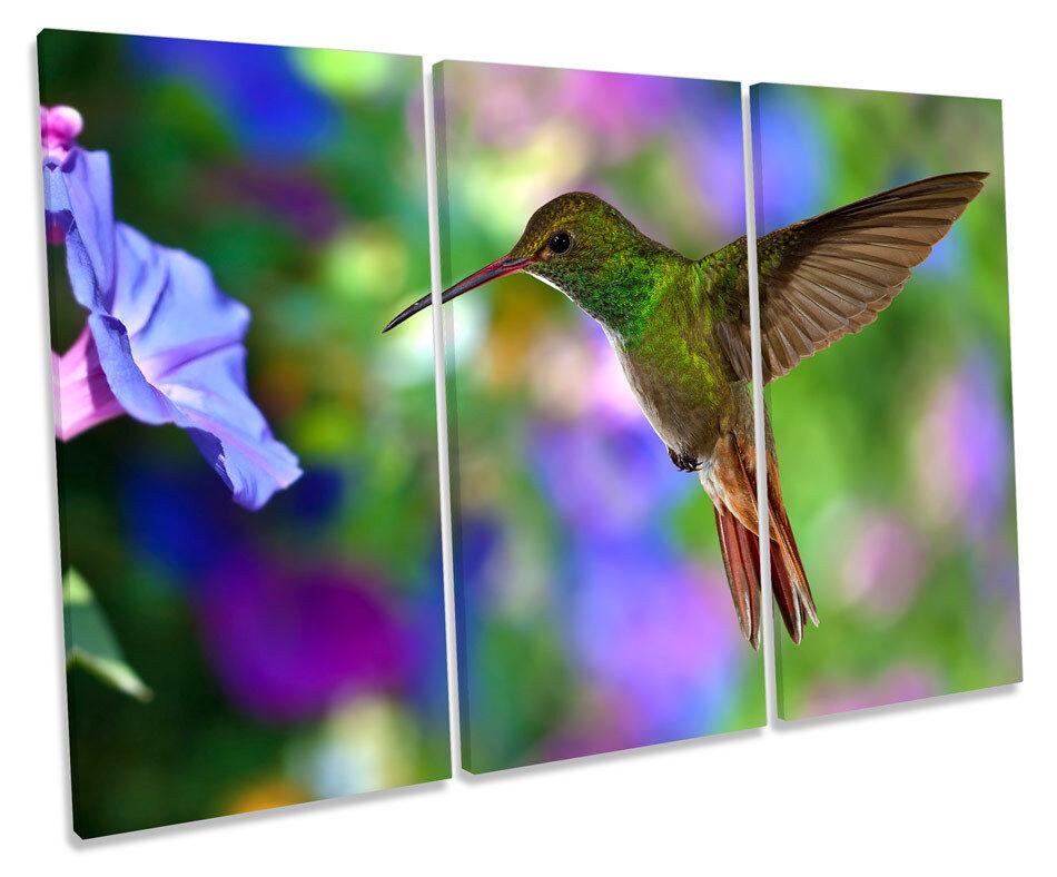 Beautiful Humming Bird CANVAS WALL ART TREBLE Box Frame Print