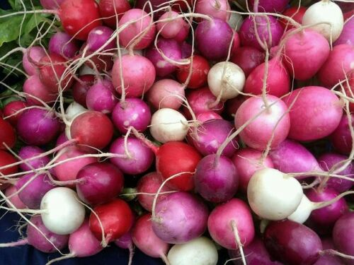 ☺5000 graines de radis 5 variétés 5 sachets de 1000 graines