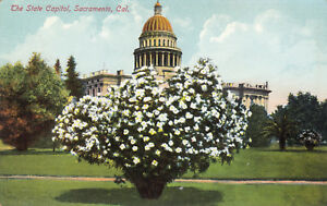 DB-Prelinen-Postcard-A468-The-State-Capitol-Sacramento-California-Garden-Rieder