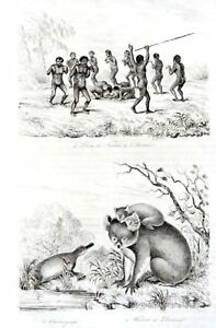 AUSTRALIA-KOALA-QUOLL-LYRE-KANGAROO-Original-1835-Antique-Prints-set-of-4