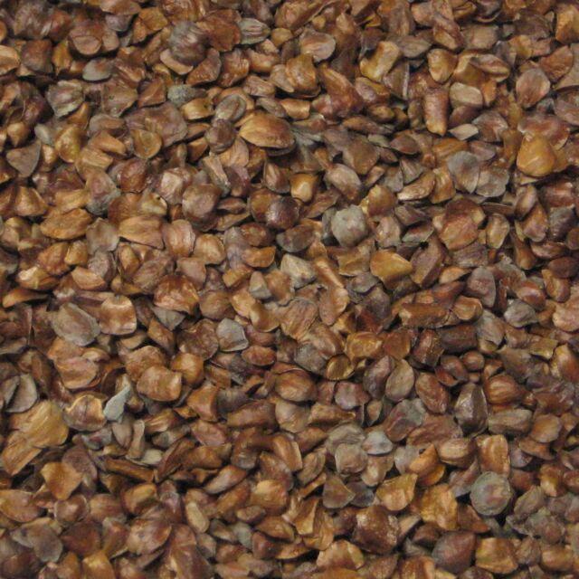 500 Monterey Cypress Bonsai Tree Seed Pack Cupressus Macrocarpa