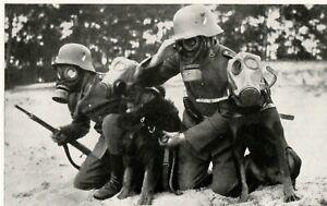 WW-2-Nachrichtentruppe-5-034-Meldehunde-mit-Fuehrern-unter-Gasmaske-034